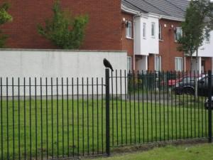 crow cuervo green ireland irlanda dublin